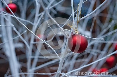 Red Christmas balls on white branches Stock Photo