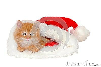 Red christmas kitten
