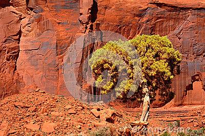 Red cliff and tree