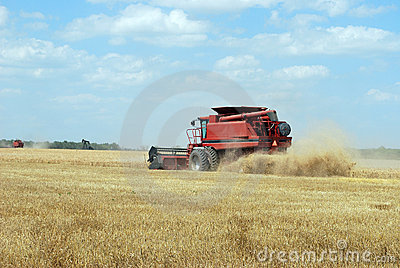 Red Combine Cuts Wheat