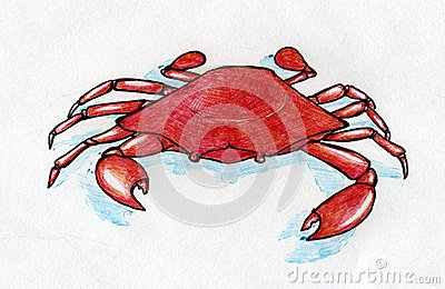 Red crab with blue shadow