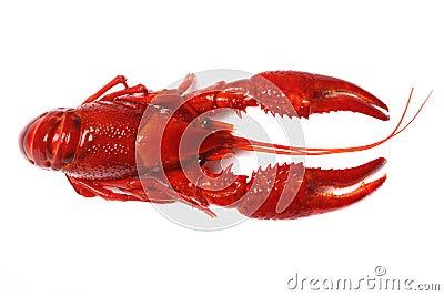 Red crawfish on white