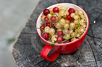 Red cup with red and white currants