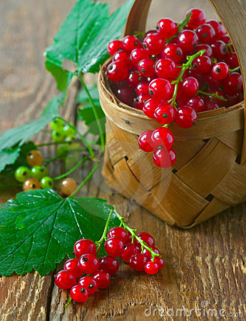 Free Red Currant Royalty Free Stock Image - 17836746