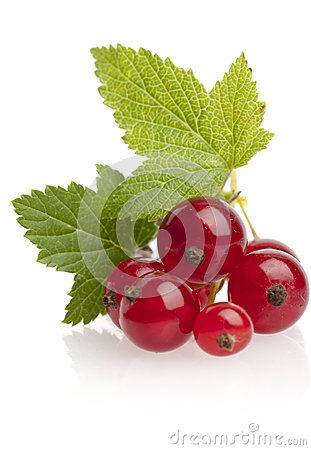 Free Red Currant Stock Images - 37055744