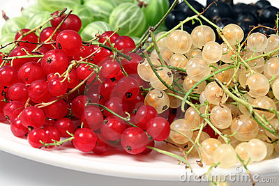 Red currant, blackcurrant and gooseberries