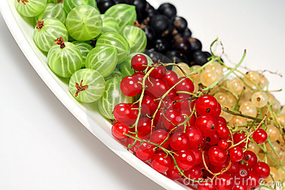 Red currant, blackcurrant, gooseberries