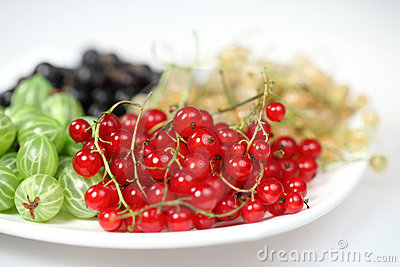 Red currant and blackcurrant and gooseberries
