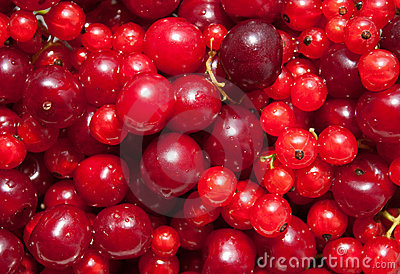 Red currant and cherry