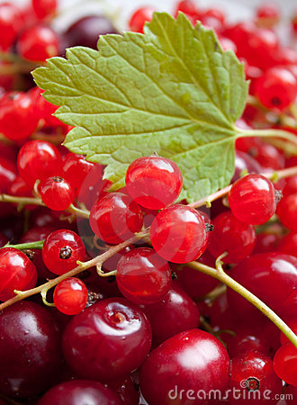 Red currant and cherry with leave
