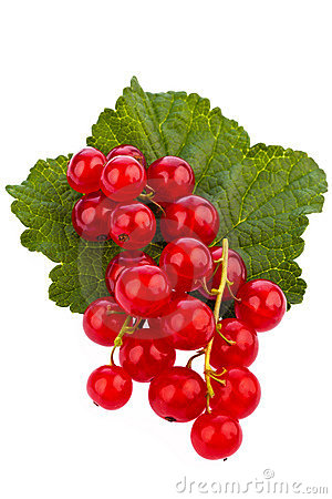 Red currant - red currant