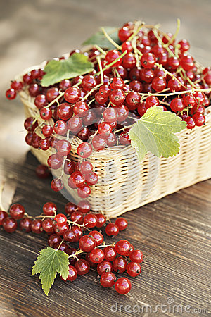 Free Red Currants Royalty Free Stock Image - 24864326
