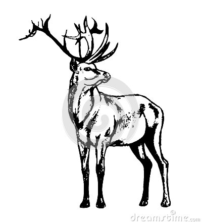 310394983479 moreover Deer outline besides Deer Antlers Clipart in addition Deer Head Stylized Zentangle Style Tribal 311377346 further Stock Illustration Deer Antlers. on deer antlers vector