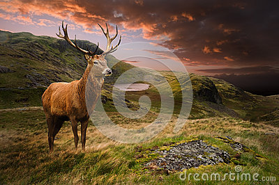 Red deer stag in dramatic mountain landscape Stock Photo