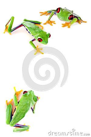 Red eyed frog corner