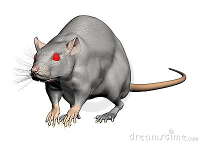 Red eyed rat