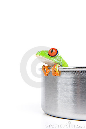 Red-eyed tree frog in cooking pot