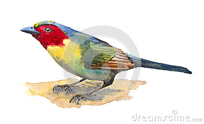 Red-faced Liocichla