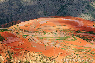 Red farmland ,dongchuan,yunnan,china