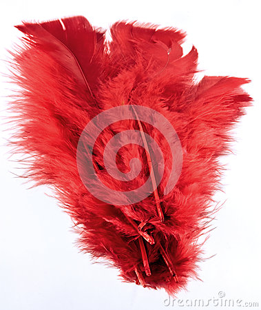 Free Red Feathers Stock Photos - 27219923