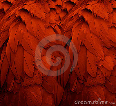 Free Red Feathers Royalty Free Stock Photography - 5392917