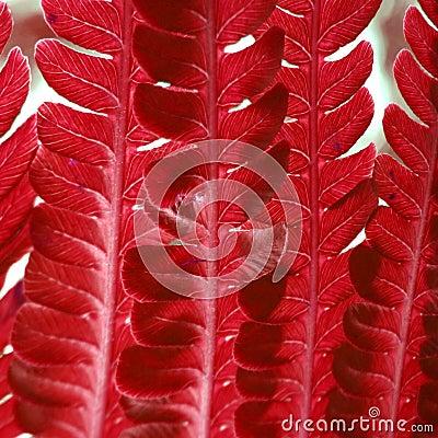 Red fern texture