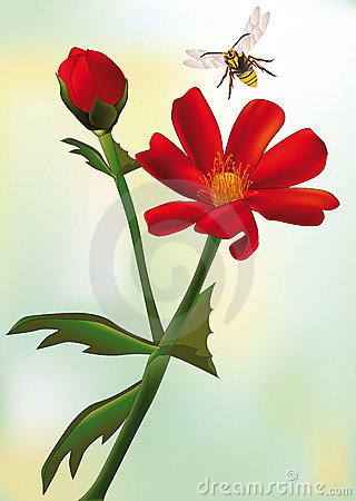 Red field flower and bee