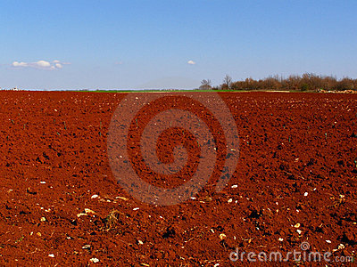 Red fields countryside