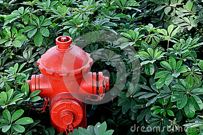 Red fire hydrant in green bush