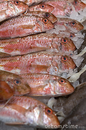 Free Red Fish. Fish Market. Cornet Red Mullet Stock Photography - 8114342