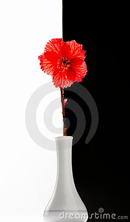 Free Red Flower Royalty Free Stock Photo - 2139035