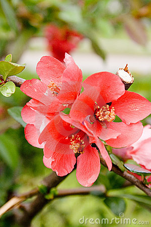 Free Red Flower Stock Photography - 750892