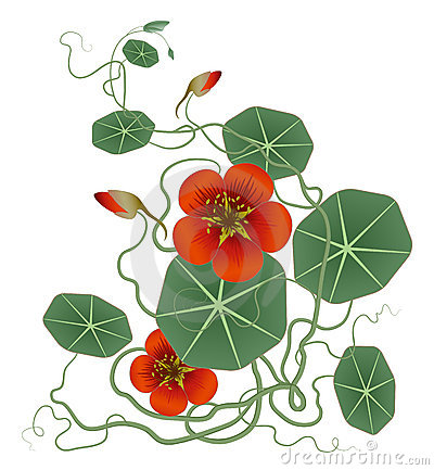 Free Red Flower And Green Lotus Leaves Royalty Free Stock Images - 13562259