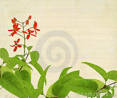 Red Flower And Foliage on Bamboo