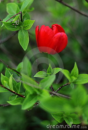 Red flower and green leaves