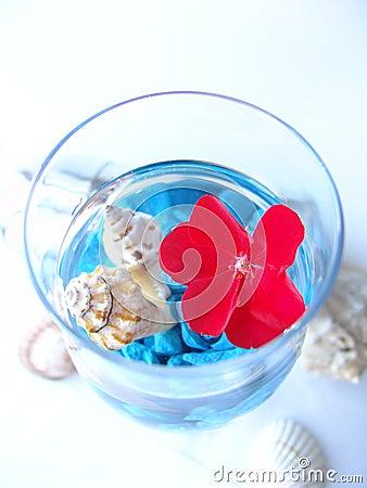 Red flower on marine background