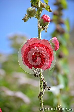 Red Flower - Portmerion Village in Wales