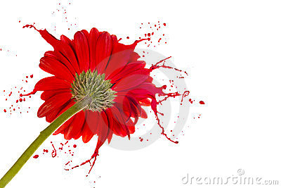Red flower with splashes