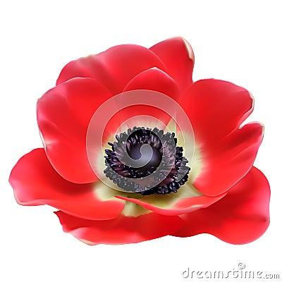 Red flower spring blossom