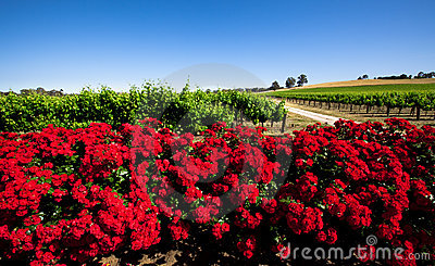 Red Flower Vineyard