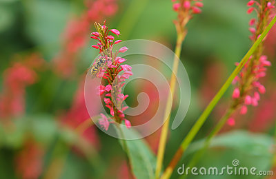 Red flower with wasp collecting pollen on bokeh background Stock Photo