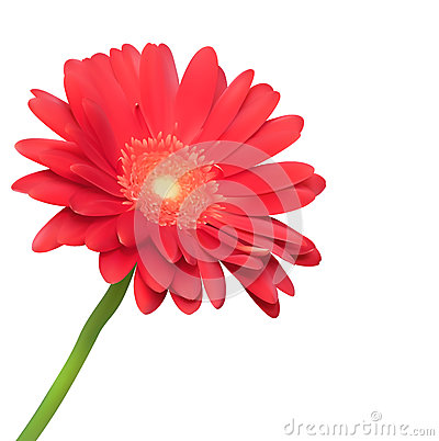 Red flower on white background