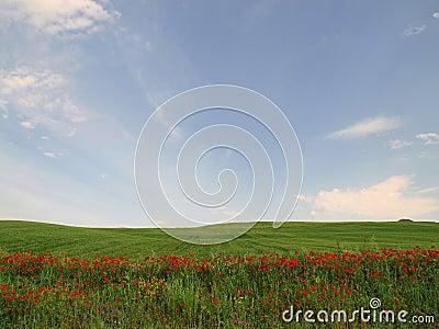 Red flowers in green field