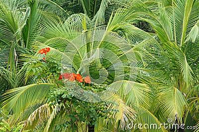Red flowers in hemp palm leaves