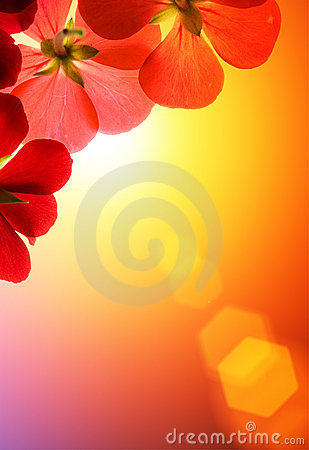 Free Red Flowers Over Sunshine Stock Photography - 9085702