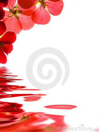 Free Red Flowers Over Water Stock Images - 2202274