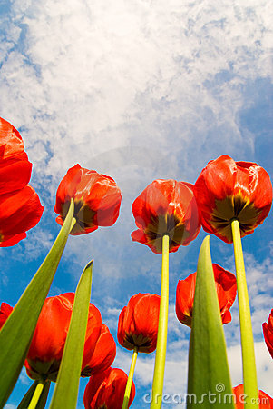 Free Red Flowers Spring Stock Photos - 14128173