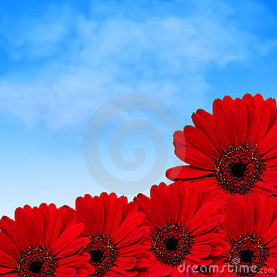 Red flowers and summer sky