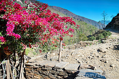 Red flowers in Tibetan village