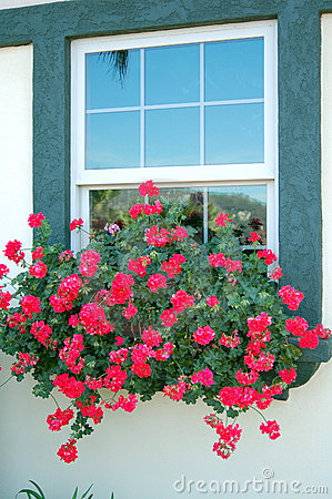 Red Flowers on Window